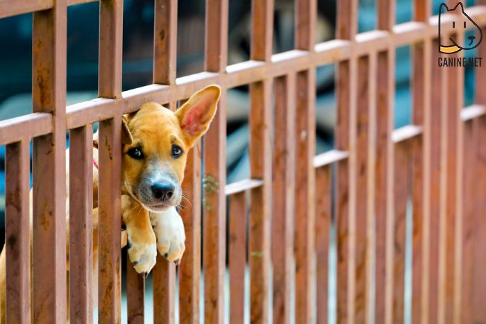 Puppy Dog Gate