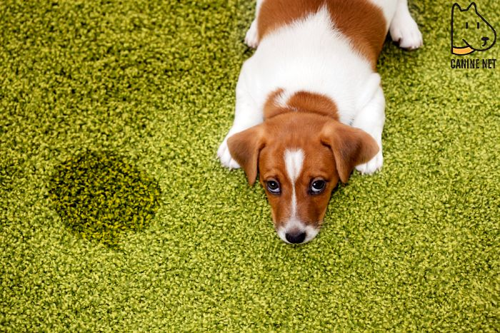 Be Patient With Dog Potty Training