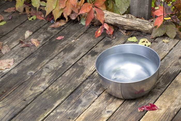 Give Them Homemade Dog Water Additive for Bad Breath