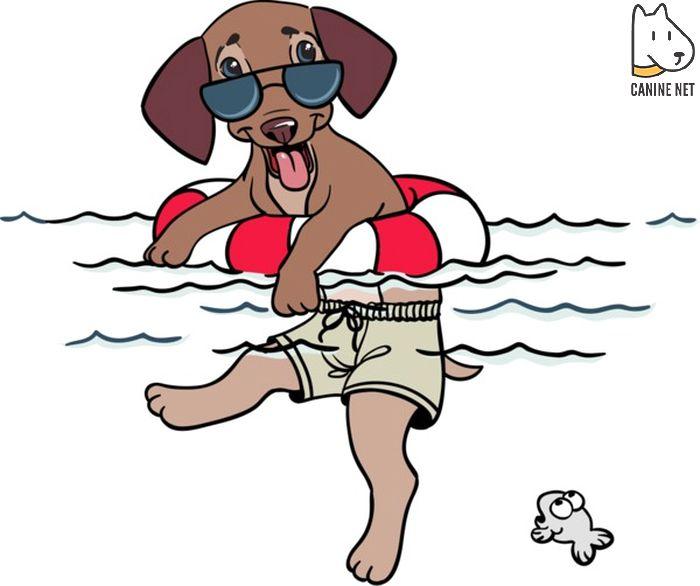 Dog Wee Wee Pads