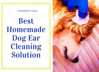 Best Homemade Dog Ear Cleaning Solution