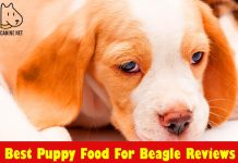 Best Puppy Food For Beagle