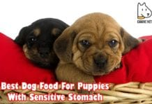 Best Dog Food For Puppies With Sensitive Stomach