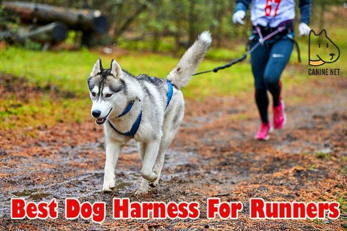Best Dog Harness For Runners