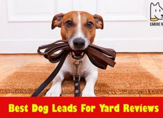 Best Dog Leads For Yard