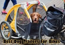 Best Dog Trailers For Bikes