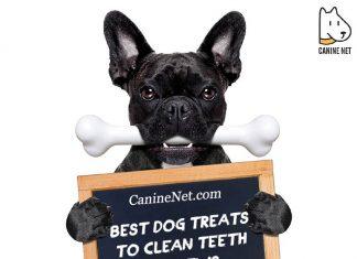Best Dog Treats To Clean Teeth