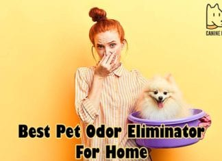 Best Pet Odor Eliminator For Home
