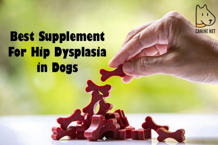 Best Supplement For Hip Dysplasia In Dogs