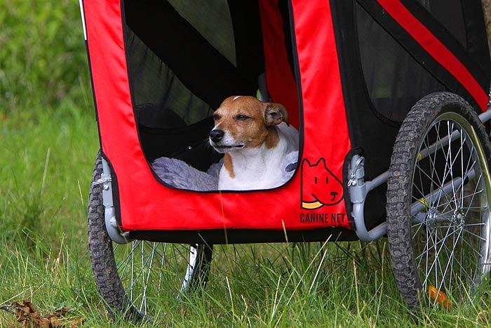 Do Dogs Like Bike Trailers?