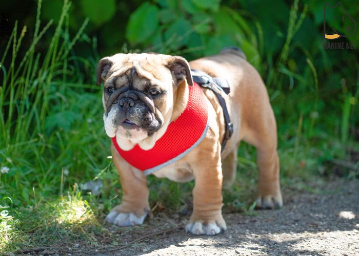 How Do I Stop My Dog From Escaping The Harness?