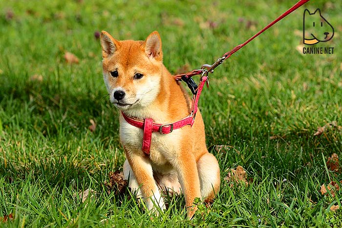 How Does Dog Lead for Yard Work?