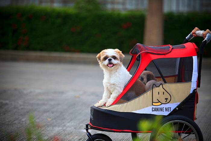 How Does The Dog Bike Trailer Work?