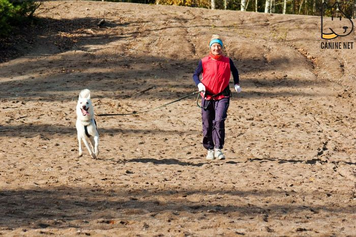 How Many Miles Can A Dog Run With You?