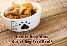 How To Keep Ants Out Of Dog Food Bowl?
