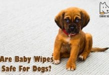 Are Baby Wipes Safe For Dogs?