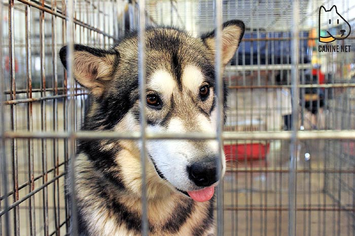 Are Outdoor Dog Enclosures Safe?