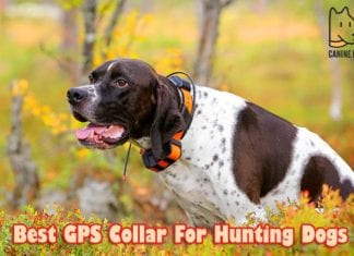 Best GPS Collar For Hunting Dogs