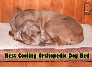 Best Cooling Orthopedic Dog Bed