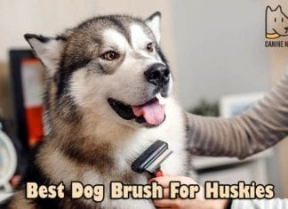 Best Dog Brush For Huskies