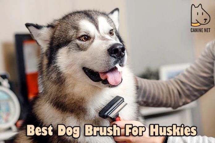 Best Dog Brush For Huskies