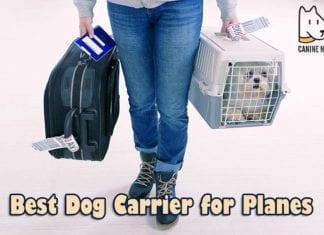 BEST Dog Carrier For Planes