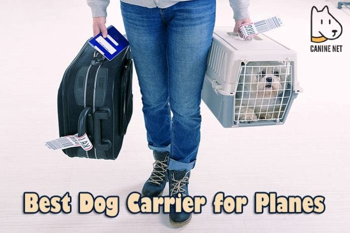 BEST Dog Carrier For Planes