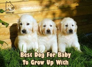 Best Dog For Baby To Grow Up With