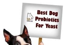Best Dog Probiotics For Yeast