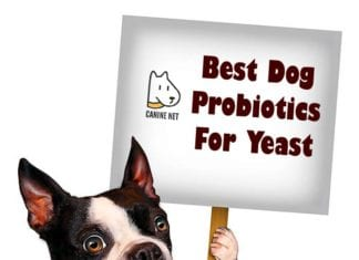 Best Dog Probiotics For Yeast