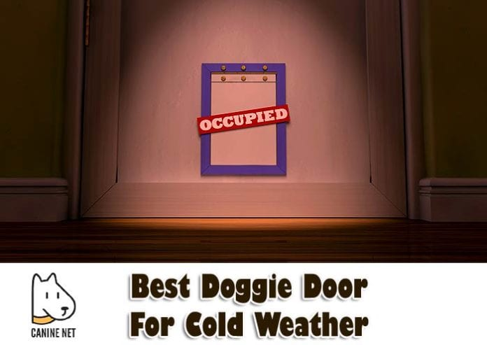 Best Doggie Door For Cold Weather