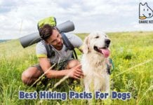 Before you start planning to hike with your dog, you have got to buy a hiking pack made just for your pup. Here are the top 10 best hiking packs for dogs.