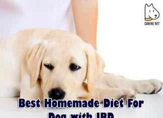 Best Homemade Diet For Dog With IBD