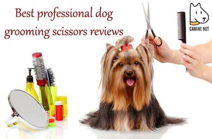 Best Professional Dog Grooming Scissors Reviews