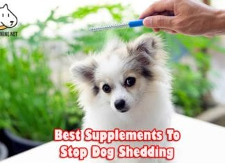 Best Supplements To Stop Dog Shedding