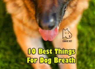 Best Things For Dog Breath