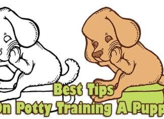 Best Tips On Potty Training A Puppy