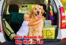 Best Vacuum For Dog Hair In Car