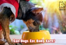 Can Dogs Eat Baby Corn?