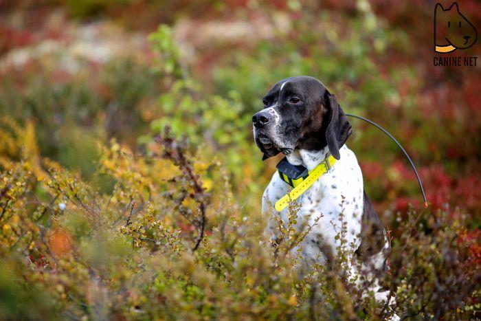 How Do GPS Dog Collars Work?