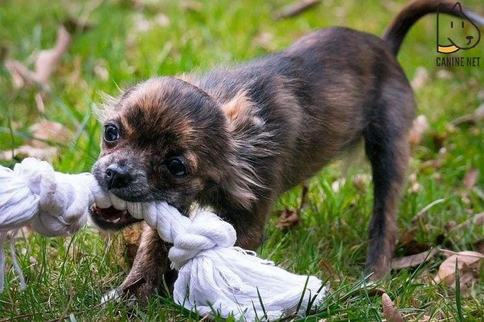 How Do I Stop My Dog From Biting My Child?