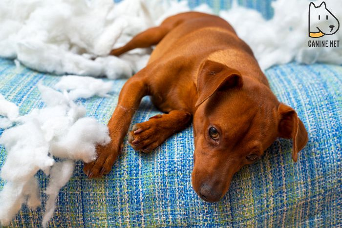 How Do You Stop A Puppy From Obsessively Biting And Chasing Its Tail?