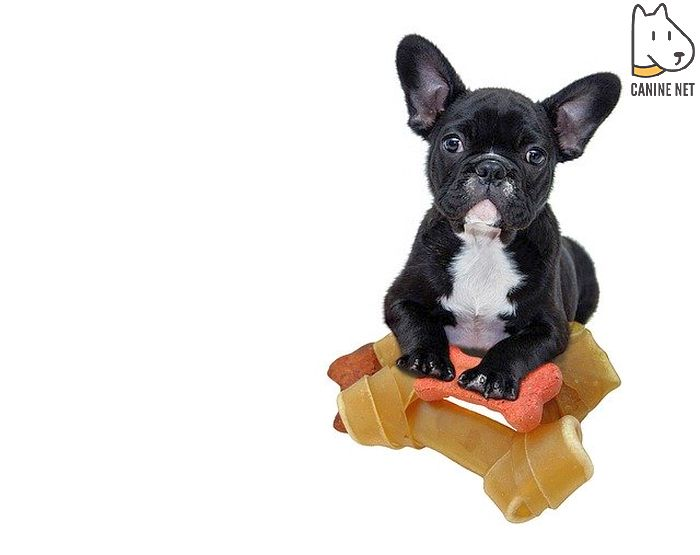 How Much Baby Food To Feed A Dog?