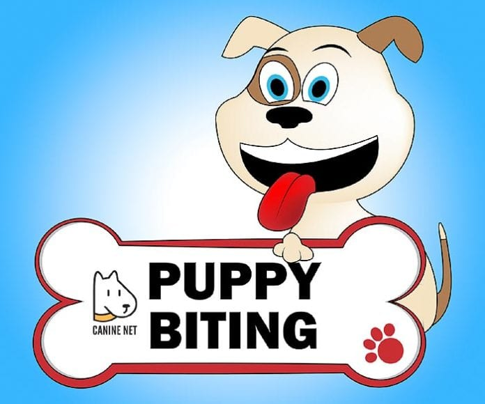 How to stop puppy biting kids?