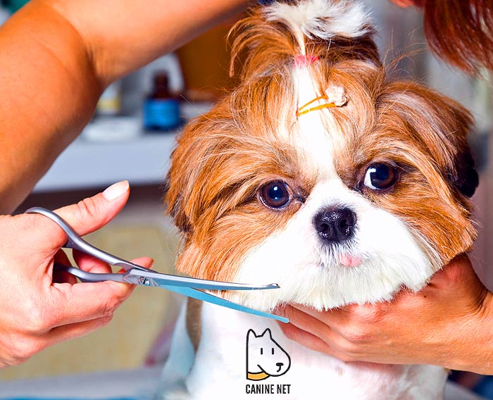 Is There A Difference Between Human And Dog Clippers?