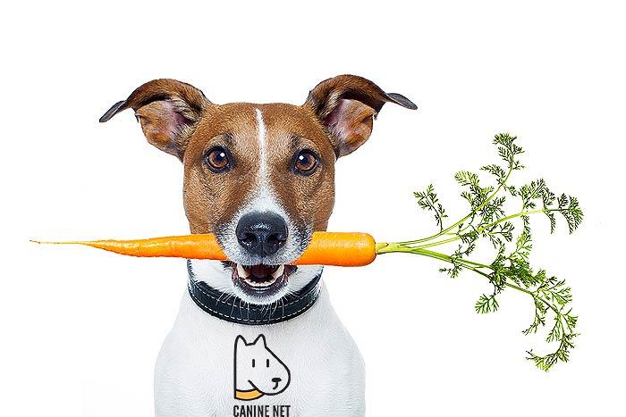 Probiotics Benefits In Dog Health