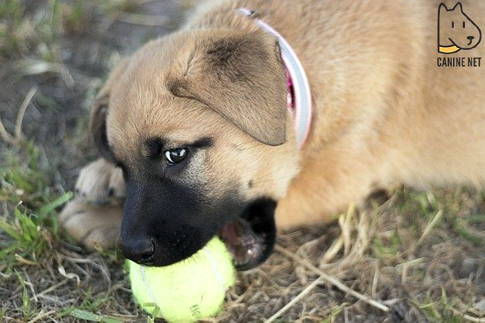 Signs Of Aggression In Puppies