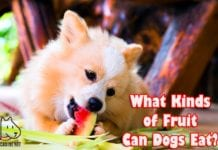 What Kinds Of Fruit Can Dogs Eat?